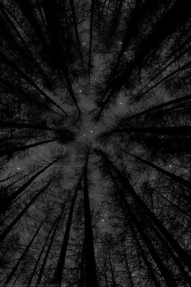 cielo-estrellas-pinos